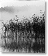 Pampas Grass In Fog Metal Print