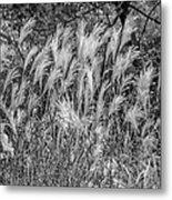Pampas Grass Monochrome Metal Print