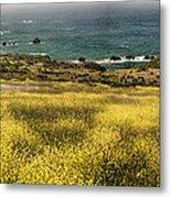 Panarama Spring On Califronia Coast By Denise Dube Metal Print