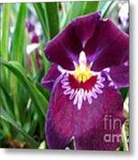 Pancy Orchid Metal Print
