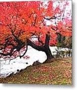 Panorama Of Red Maple Tree, Muskoka Metal Print