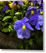 Pansy Planter Metal Print
