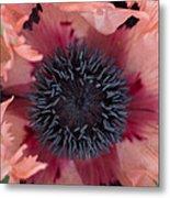 Papaver Orientale Pink Ruffles Metal Print