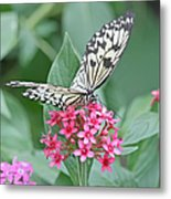 Paper Kite Butterfly - 2 Metal Print
