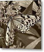 Paper Kite On Frangipani Flowers Metal Print