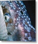 Paper Nautilus Port Phillip Bay Metal Print