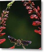 Paper Wasp In Flight Metal Print