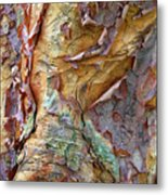 Paperbark Abstract Metal Print