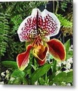 Paph Fiordland Sunset Orchid Metal Print