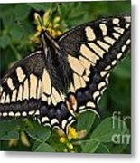 Papilio Machaon Butterfly Sitting On The Lucerne Plant Metal Print