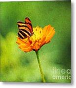 Papillon Metal Print by Darren Fisher
