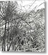 Papyrus Black And White Metal Print