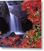 Paradise Valley Stream In Fall Metal Print