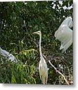 Parents Protecting The Nest Metal Print