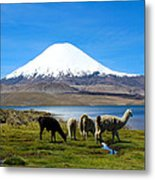 Parinacota Volcano Lake Chungara Chile Metal Print
