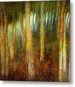 Park #8. Memory Of Trees Metal Print