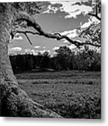 Park In Black And White Metal Print