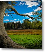 Park In Massachusetts In The Fall Metal Print