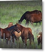 Parker Ranch Horses Metal Print