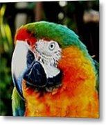Parrot  Metal Print by Bruce Kessler