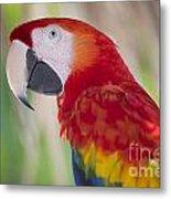 Parrot On Isla Tortuga-207 Metal Print