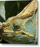 Parsons Chameleon From Madagascar 12 Metal Print