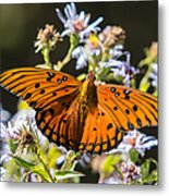 Passion Butterfly Metal Print