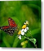 Passion Butterfly Painted Metal Print