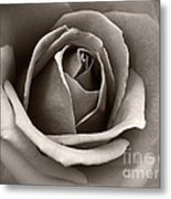 Passion Metal Print by Eena Bo