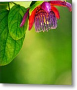 Passion Flower Metal Print by Julio Solar