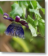 Passion Flower - Ruby Glow Metal Print