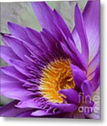 Passionate Purple Water Lily Metal Print