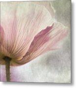 Pastel Pink Poppy Metal Print
