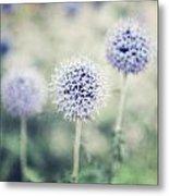 Pastel Purple Allium Bulbs Metal Print