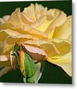 Pastel Rose Ruffles Metal Print