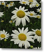 Patch Of Daisies Metal Print