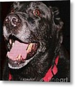 Patchwork Black Lab Closeup Metal Print