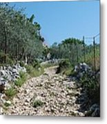 Path Among Olive Trees Metal Print