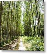 Path And Trees Metal Print