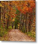 Path In A Fall Woods Metal Print