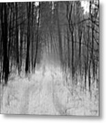 Path In A Forest Metal Print