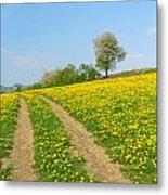 Path In Dandelion Meadow  Metal Print
