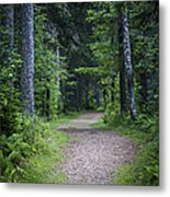 Path In Dark Forest Metal Print by Elena Elisseeva