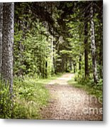 Path In Green Forest Metal Print by Elena Elisseeva