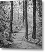 Path In The Foggy Forest Metal Print
