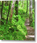 Path In The Forest Metal Print by Jill Lang