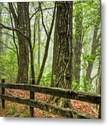 Path Into The Forest Metal Print by Debra and Dave Vanderlaan