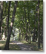 Path Into Woods Metal Print by Cim Paddock