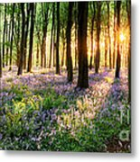 Sunrise Path Through Bluebell Woods Metal Print