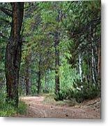 Path Through The Pines - Casper Mountain - Casper Wyoming Metal Print